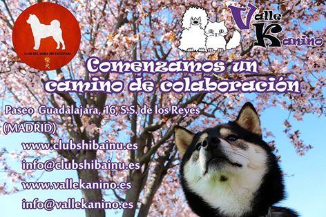 17/04/16 – Sesiones de educación canina